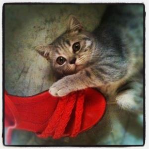 Lola da ayakkabıları seviyor... Kız kedi tabii...